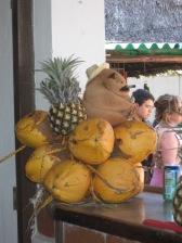 Sculture di cocco