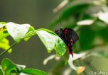 Farfalle di bordano
