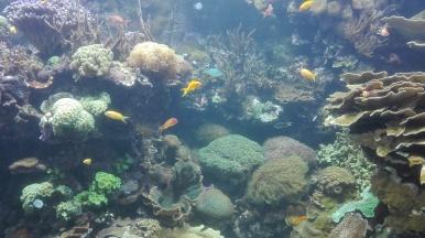 PARCO OCEANOGRAFICO